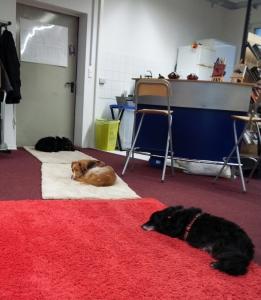 Trufa, Keks und Negrito (von vorne) testen die neuen Teppiche
